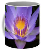 The Lotus Flower - Tropical Flowers Of Hawaii - Nymphaea Stellata Coffee Mug