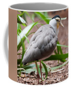 The Masked Lapwing Vanellus Miles Previously Known As The Mask Coffee Mug