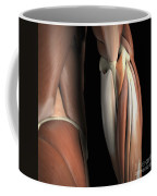 The Muscles Of The Elbow Rear Coffee Mug