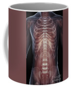 The Muscles Of The Torso Coffee Mug