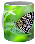 The Paper Kite Or Rice Paper Or Large Tree Nymph Butterfly Also Known As Idea Leuconoe 2 Coffee Mug