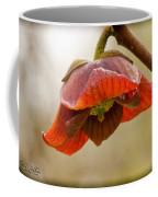 The Paw Paw Bloom Coffee Mug