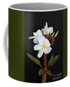 The Plumeria Coffee Mug