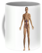 The Renal System Male Coffee Mug
