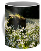 The Stump And The Snowdrops Coffee Mug by Anne Gilbert