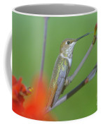 The Tongue Of A Humming Bird  Coffee Mug by Jeff Swan