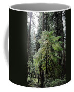 The Tree In The Forest Coffee Mug