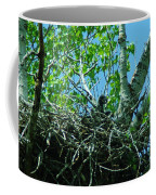 The Young Eaglet Peaks Out  Coffee Mug