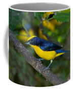 Thick-billed Euphonia Coffee Mug