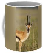 Thomsons Gazelle Coffee Mug