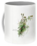 Thorny Burnet C1950 Coffee Mug