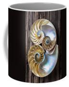 Three Chambered Nautilus Coffee Mug by Garry Gay