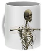 Three Dimensional View Of Female Rib Coffee Mug by Stocktrek Images