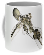 Three Dimensional View Of Female Spine Coffee Mug by Stocktrek Images