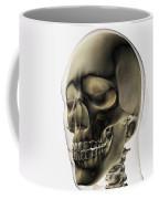 Three Dimensional View Of Human Skull Coffee Mug by Stocktrek Images