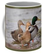 Three Mallards Card - Ducks Coffee Mug