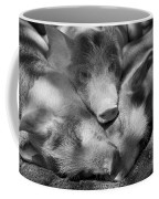 Three Piglets Sleeping Against Each Coffee Mug