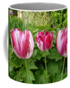 Three Pink Rembrandt Tulips Coffee Mug