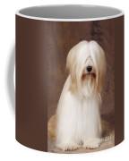 Tibetan Terrier Dog Coffee Mug