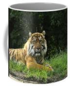 Tiger At Rest Coffee Mug
