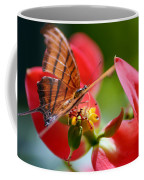 Tiger Stripped Butterfly Coffee Mug