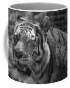 Tiger With A Hard Stare Coffee Mug