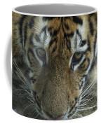 Tiger You Looking At Me Coffee Mug