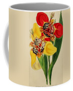 Tigridia Pavonia And Conchiflora Coffee Mug