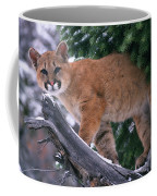T.kitchin 15274d, Cougar Kitten Coffee Mug