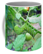 Tobacco Hornworm - Manduca Sexta - Six Spotted Hawkmoth Coffee Mug