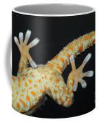 Tokay Gecko Feet Coffee Mug