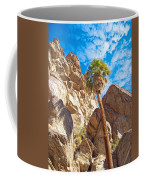 Top Of A Palm Near Top Of Andreas Canyon-ca Coffee Mug