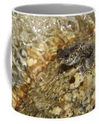 Torrent Treefrog Aka Waterfall Frog Coffee Mug