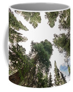 Towering Pine Trees Coffee Mug