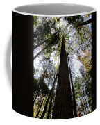 Towering Timber Coffee Mug