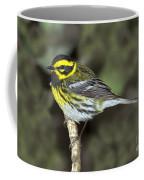 Townsends Warbler Coffee Mug