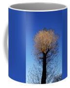 Tree In Afternoon Sunlight Coffee Mug