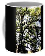 Tree In Blue Ridge Mountains Coffee Mug