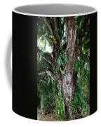 Tree In Kauai Coffee Mug
