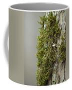 Tree Moss Closeup 2013 Coffee Mug