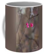 Tree Seed Capsule Pod Bursts Coffee Mug