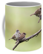Tree Sparrows Coffee Mug