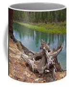 Tree Stump In Des Chutes Nf-or Coffee Mug