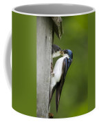 Tree Swallow Feeding Chick Coffee Mug by Christina Rollo