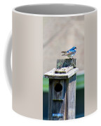 Tree Swallows Coffee Mug