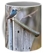 Tree Swallows On Birdhouse Coffee Mug