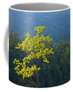 Tree With Yellow Leaves In Acadia National Park Coffee Mug