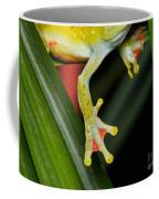 Treefrog Foot Coffee Mug