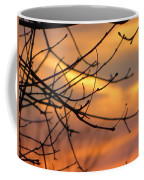 Trees Ablaze In Autumn Coffee Mug