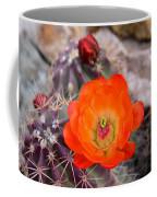 Trichocereus Cactus Flower  Coffee Mug